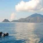I delfini al largo delle isole