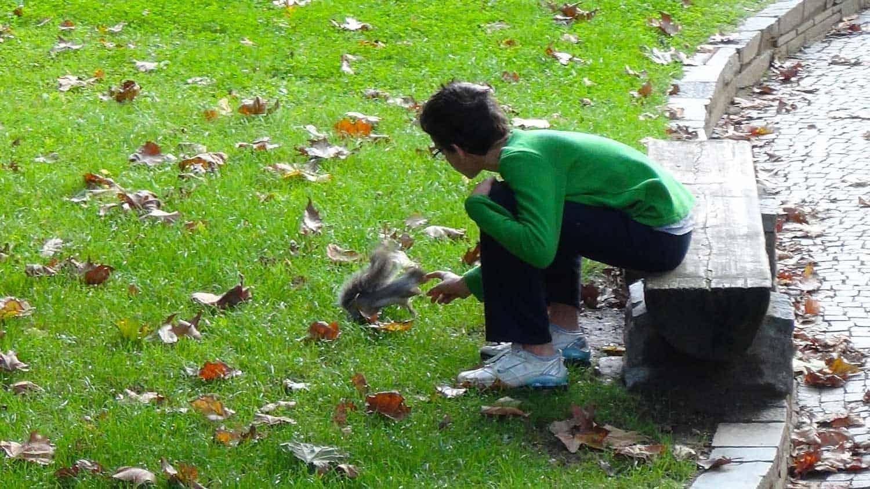 Parco del Valentino- Gli scoiattoli
