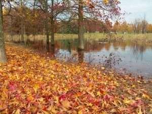 Il Parco del Valentino in autunno