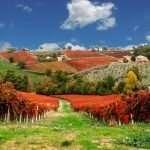 Montefalco - Le vigne