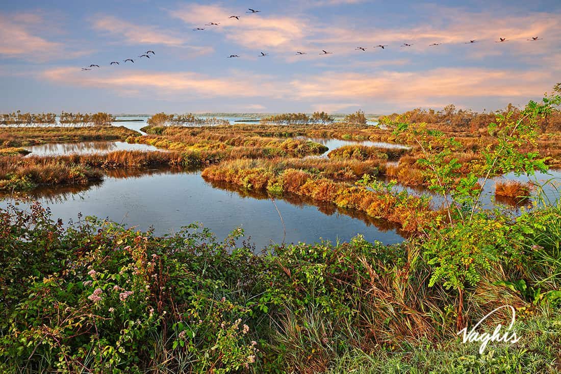 Giardino Botanico Litoraneo di Porto Caleri - © Vaghis - viaggi & turismo Italia - Tutti i diritti riservati