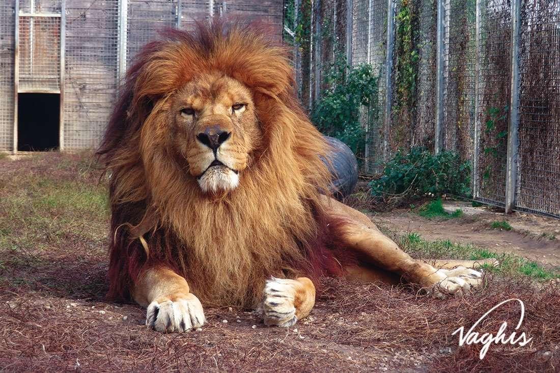 Tiger Experience - © Vaghis - Viaggi & turismo Italia - Tutti i diritti riservati