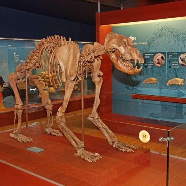 Museum Ladin Ursus Ladinicus - © Freddy Planinschek