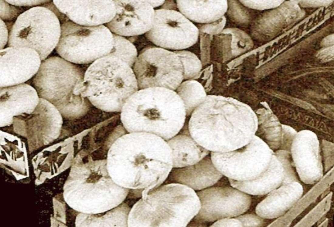 Cipolla di Isernia